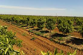 Agricultural